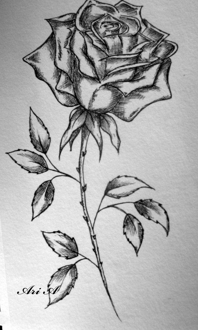 Singe Rose by x-thesmallprint-x on DeviantArt