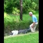 Watch dumb Charlie Crist look-alike get what he deserves from angry gator