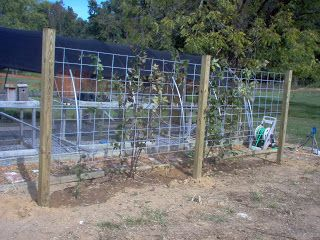 How to...inside and out: BLACKBERRY TRELLIS