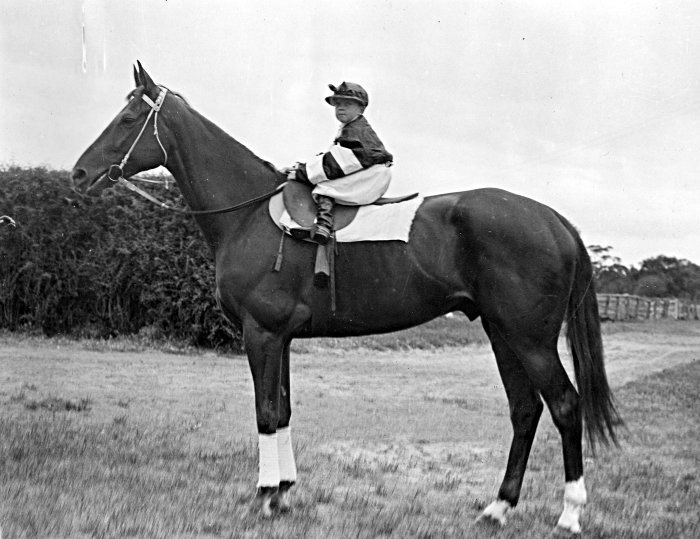 Pharlap from the 30s