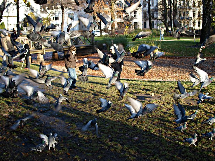 Chasing pigeons in the Castle Park