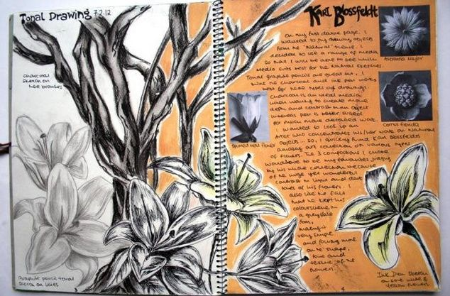 Art sketchbook gcse Blossfeldt research