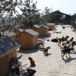 Isparta Belediyesi hayvan barınağı Projesine başlıyor