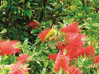 A guide to bush tucker #food #recipes #camping #Australia #outback