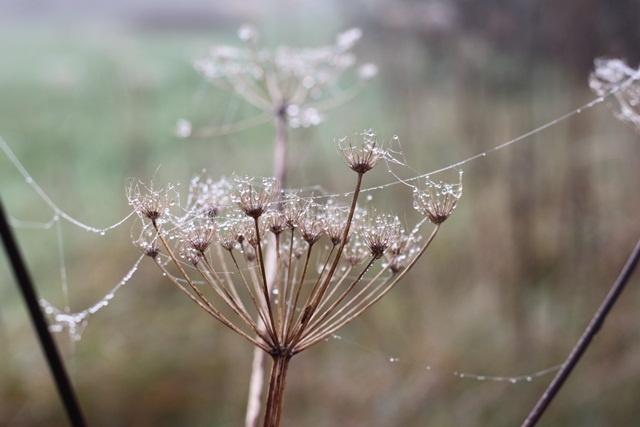 ^^: Gardens Inspiration, Inspiration Maine, Spiders Silk