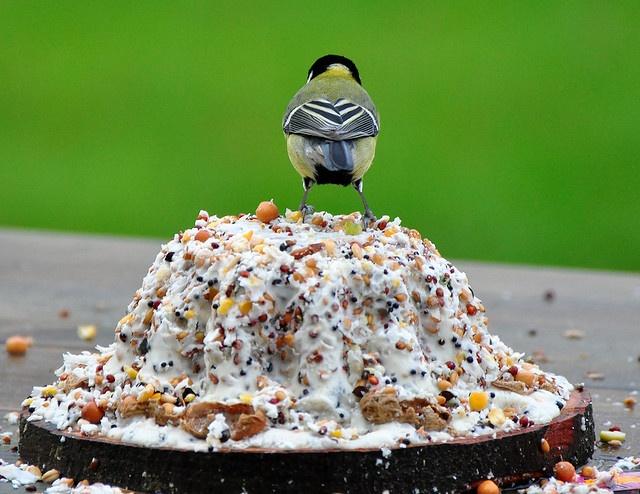 Lekkere taart voor de vogeltjes in de winter