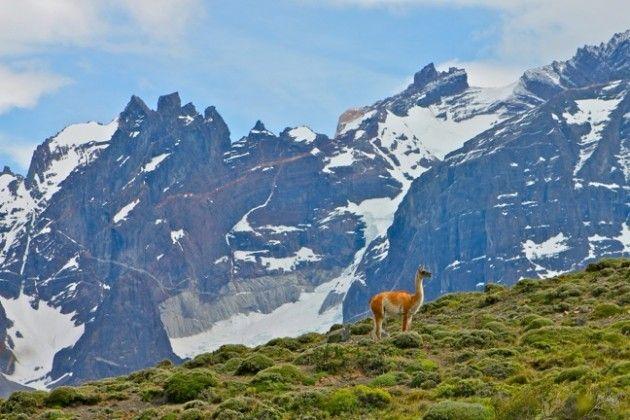 Patagonia, in Torres Del Paine National Park, near Puntas Arenas, Chile