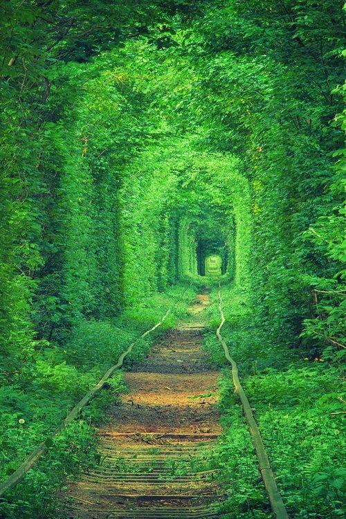 Rail Tree Tunnel, Ukraine photo via orient