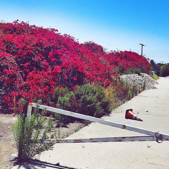 Urgent: cone emoji ⚠️ #flowers #galore #cone #instafollow #FF #tagforlikes #instafashion #fashion