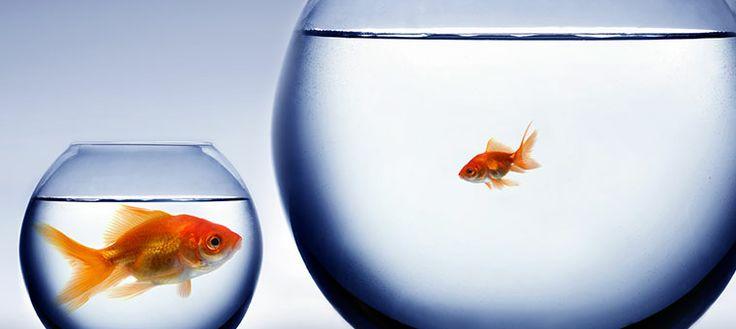 diseñador freelance o agencia1 ¿Diseñador freelance o agencia?¿A quién debo contratar?
