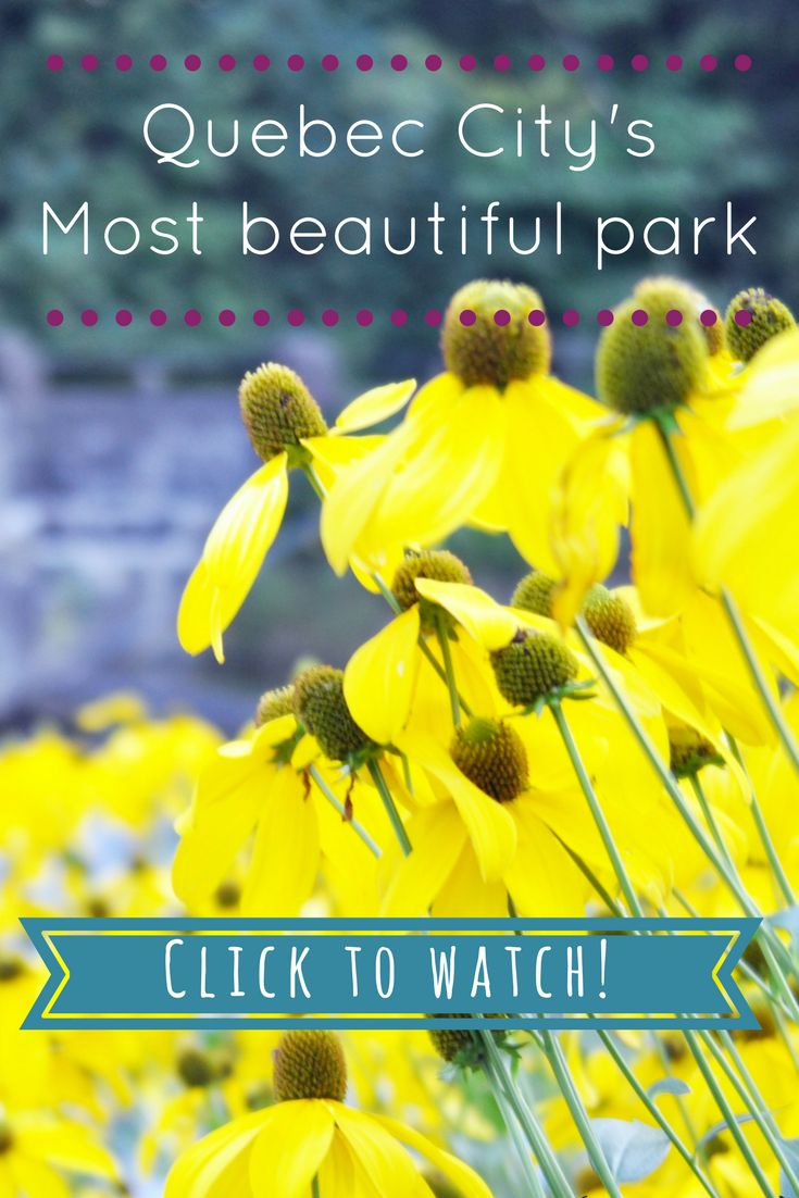 Which of QC City's is your tour guide favorite park? Click to find out!