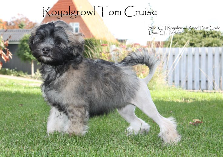 Royalgrowl Tom Cruise
