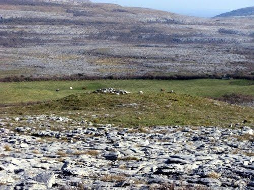 The best views of the Burren from Pat Nagles farm in Pollough at the Southern slope of Slievecarran,  the Burren, Clare, Ireland #ecotourism #travel