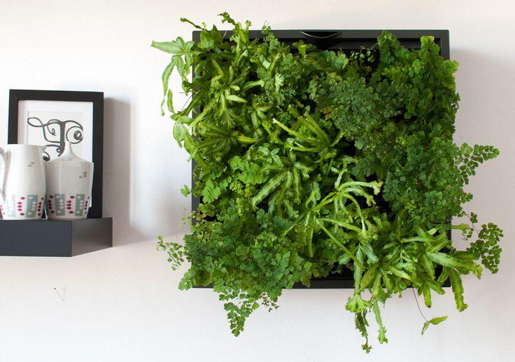 Ein Karoo Modul mit Farnen bepflanzt