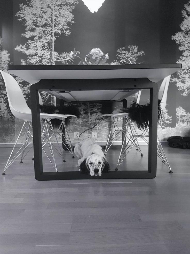 Aktivisering av en hund som må holdes i ro | Engelsksetter.com