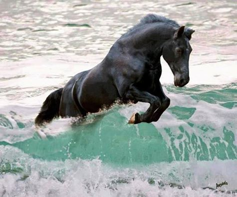 Black horse jumping the wave. Awesome shot!