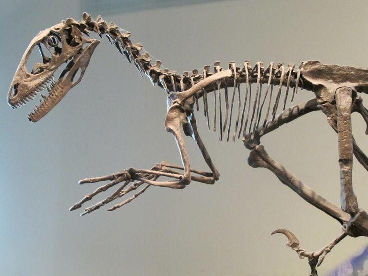 deinonychus sculpture by pheaston - photo #24