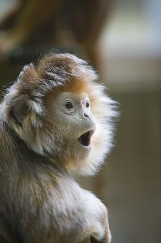 Why is the monkey surprised? The best caption will win a tendon reliever, to never leave social media: http://ow.ly/rTf5c