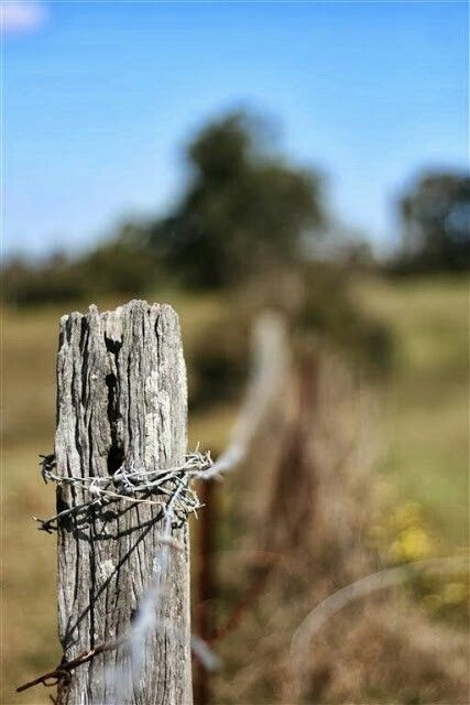 Barbed Wire Fence  - Depth of field study.  Australian countryside