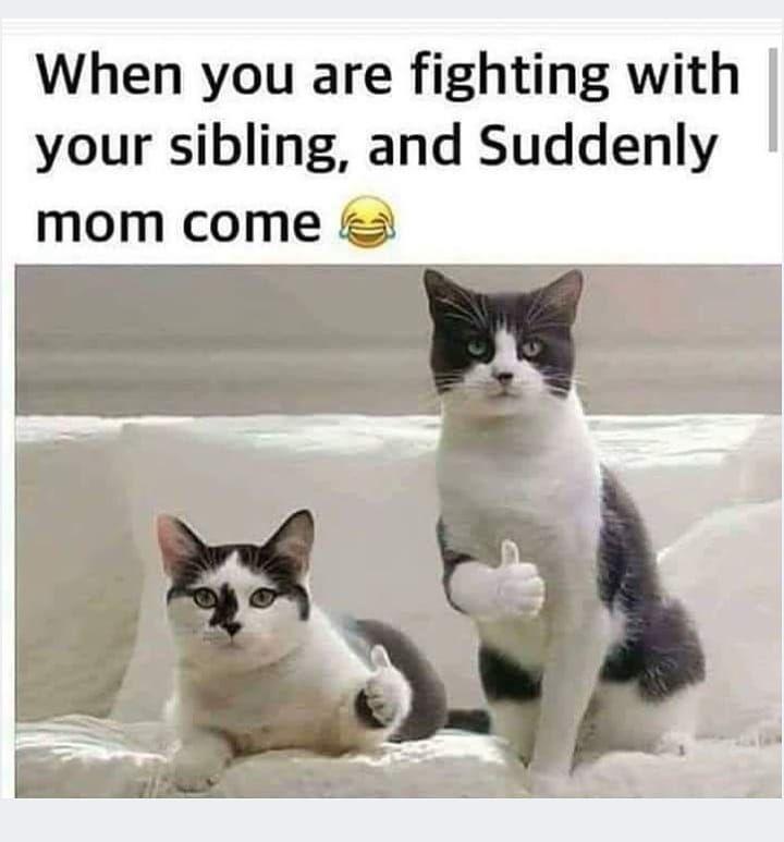 21 Lol Hilarious Real Life Pics Thug Life Meme Funny Kid Memes Super Funny Memes New Funny Memes