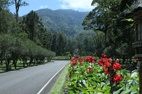Bali-Botanical-Garden-3