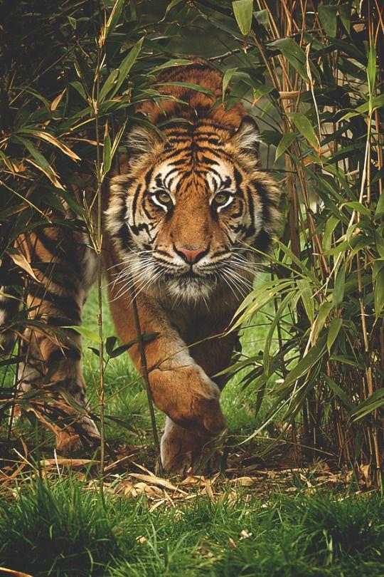 Fantasy, Art, Animals, Nature, Quotes & Fashion