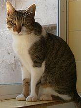 Gato Beco. Sobrevivió con su hermano en la calle.