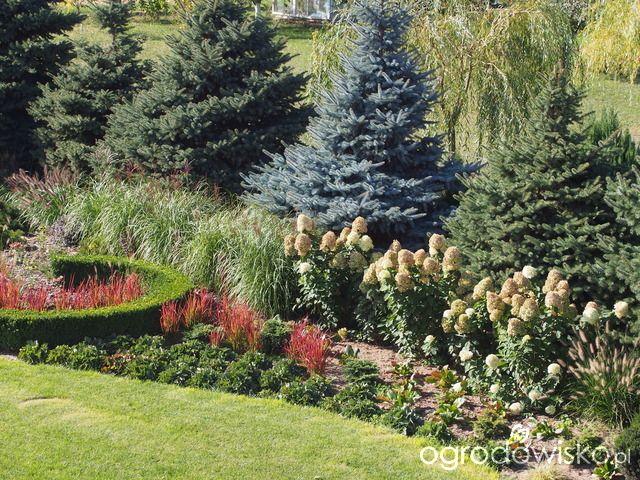 Marzenia i plany vs. rzeczywistość - strona 321 - Forum ogrodnicze - Ogrodowisko