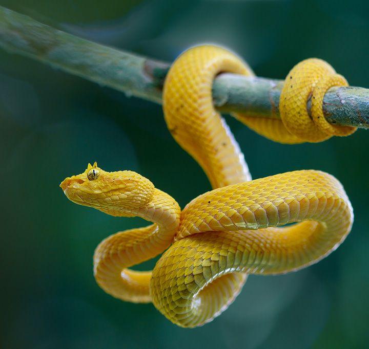 hanging snake - Google Search