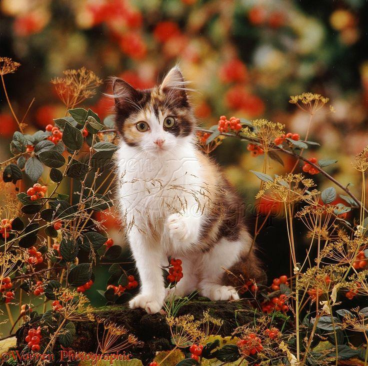 Berry kitty