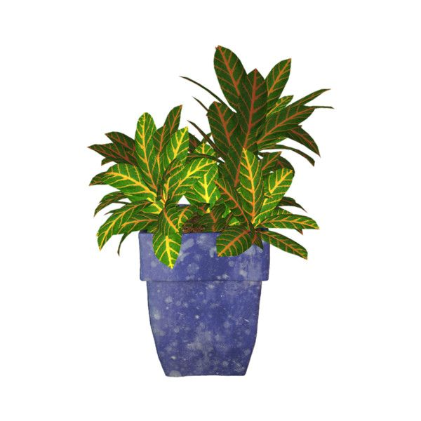 potted plants, indoor plants_цветы в горшках,комнатные цветы (55).png ❤ liked on Polyvore featuring plantas and plants
