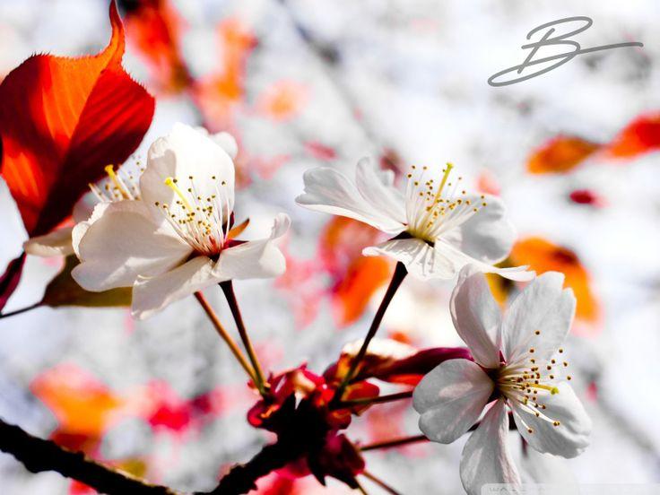 Bahar. Mevsimlerin en güzeli ve en nazlısıdır bahar... Kıştan sonra uyanan, canlanan, yeşeren, çiçeklenen ve coşan, enerjisiyle hepimizin içini kıpır kıpır eden bahara olan aşkımız her yıl yeniden başlar ve hiç bitmez... İçimizdeki bahar aşkı yüzünden bu B, biraz da baharın B'si...