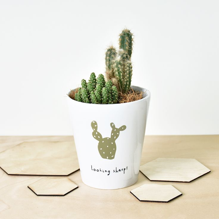 1000 ideas about cactus plants for sale on pinterest Cactus pots for sale