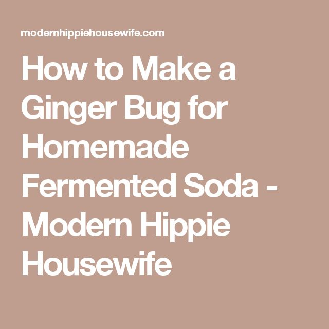 How to Make a Ginger Bug for Homemade Fermented Soda - Modern Hippie Housewife