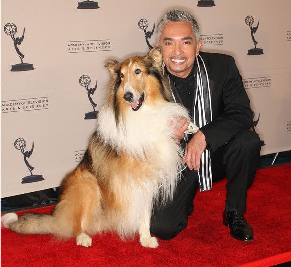 cesar millan | Cesar Millan Television personality Cesar Millan (R) and Lassie attend ...