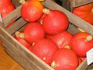 En septembre, c'est la saison de la récolte des courges au potager : conseils pour les cueillir à pleine maturité et pour les conserver tout l'hiver.