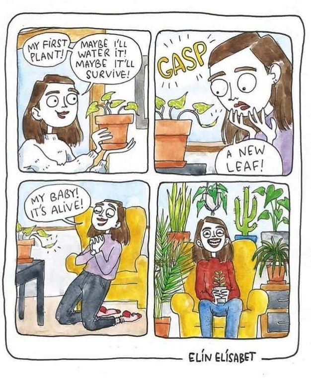 Me When I Got My First Baby Succulents Plant Cartoon Plant Jokes Plant Lady