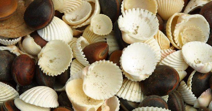 Idéias de arte e artesanato: caixas com conchas marinhas. Caixas com conchas marinhas podem servir a vários propósitos artísticos e decorativos. De eternizar umas férias de verão com sua própria coleção de conchas marinhas a decorar um quarto de praia ou uma festa temática à beira-mar. Para melhores resultados use somente conchas que tenham sido limpos de cracas e quaisquer outros detritos. Lixe as ...