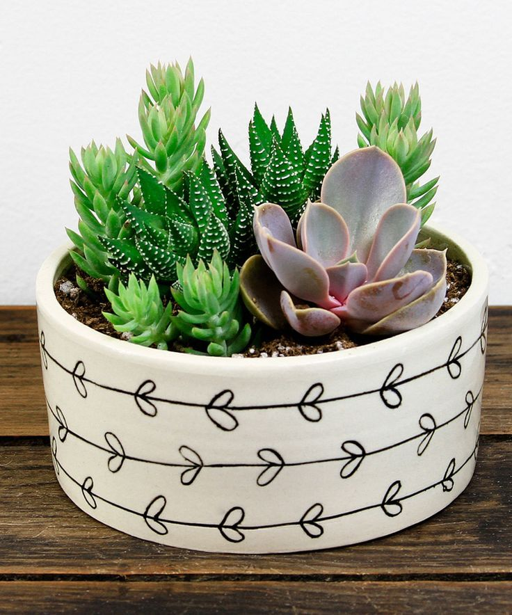 Look at this Heart Vine Potted Succulent on #zulily today!