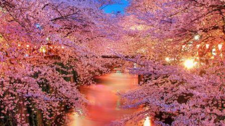 Spring japan sakura river park nature HD Wallpaper