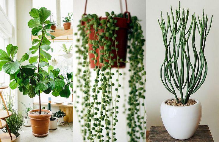 Fyll hemmet med gröna växter