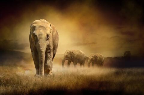 most endangered animals elephant