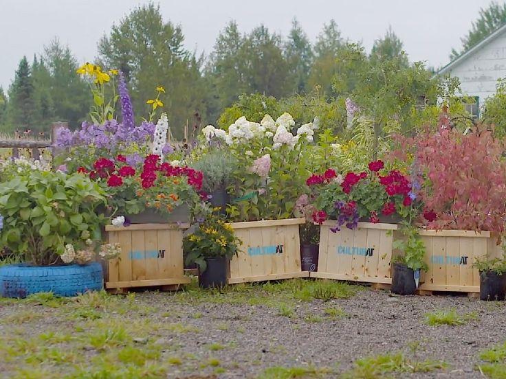 La botaniste Sylvie Bérubé a vu une occasion d'affaires avec la venue du projet CULTURAT. Elle a conçu des bacs à fleurs qu'elle vends à toutes les municipalités de la région. Le bac de bois est disponible avec une hydrangea bleue.