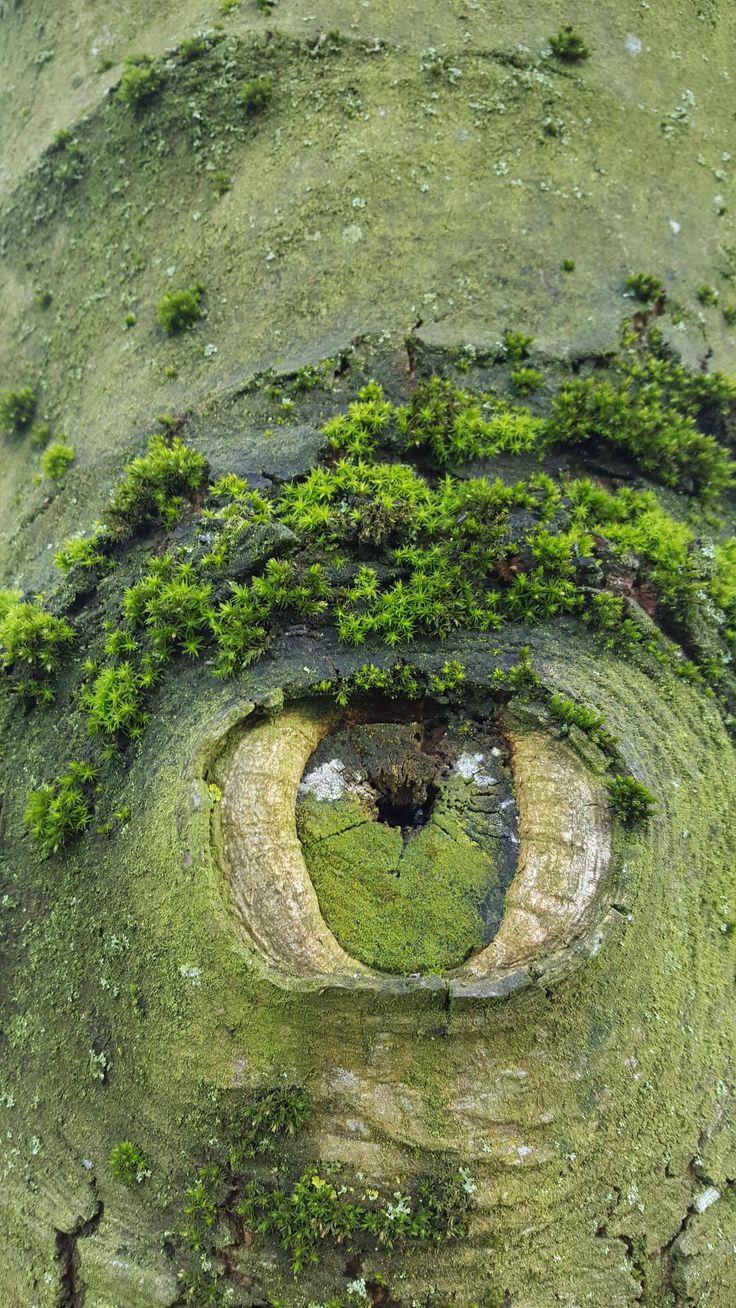 """ T' as d'beaux yeux, tu sais"" ( Quai des brumes, Jean Gabin, Michèle Morgan ) / Arbre. / Tree. / By hasmodia."