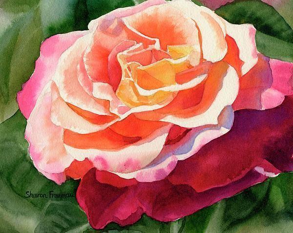 25+ best ideas about Rose Petals For Sale on Pinterest | Paper ...