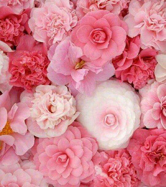1856 besten blooms flowers bilder auf pinterest sch ne. Black Bedroom Furniture Sets. Home Design Ideas