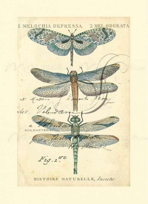 Dragonfly Ephemera I - inspiration only- thought this would be great to paint on something