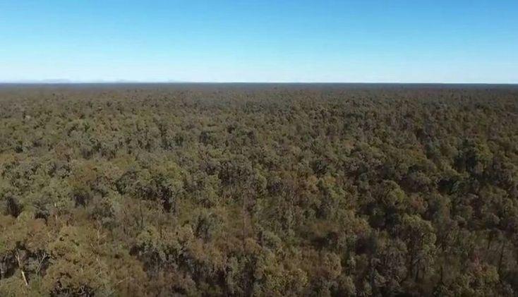 Pilliga forest Narrabri