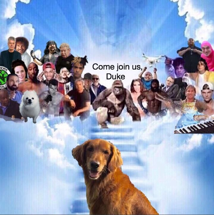 Duke The Bushs Baked Beans Dog Has Died This Guy Was The Reason I Spilled Baked Beans All Over Myself In The Theaters Baked Beans Dogs Beans