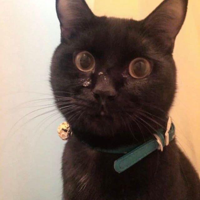 顔に雫がついてるの知らないノーチェ #黒猫 #猫 #ねこすきさんと繋がりたい #ねこ部 #雫 #愛猫